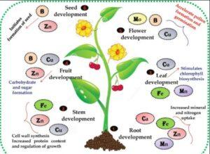 ریز مغذی ها در کشاورزی