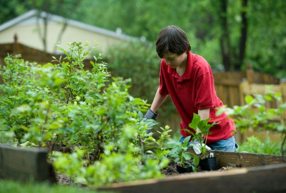 کود دهی به گیاهان آپارتمانی