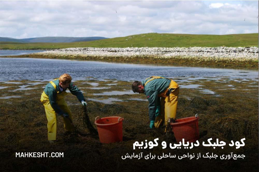 کود جلبک دریایی وکوزیم