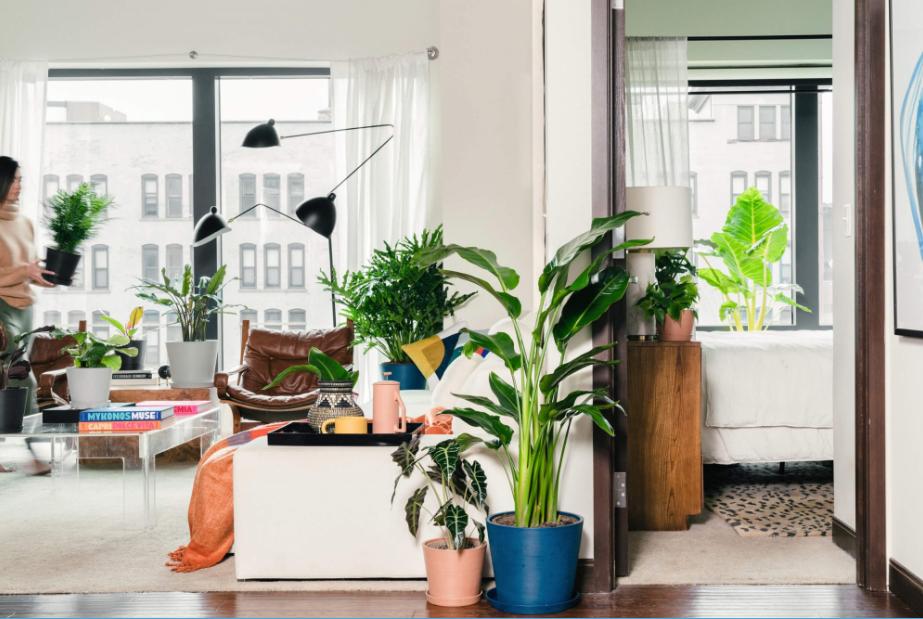 کوددهی گیاهان آپارتمانی