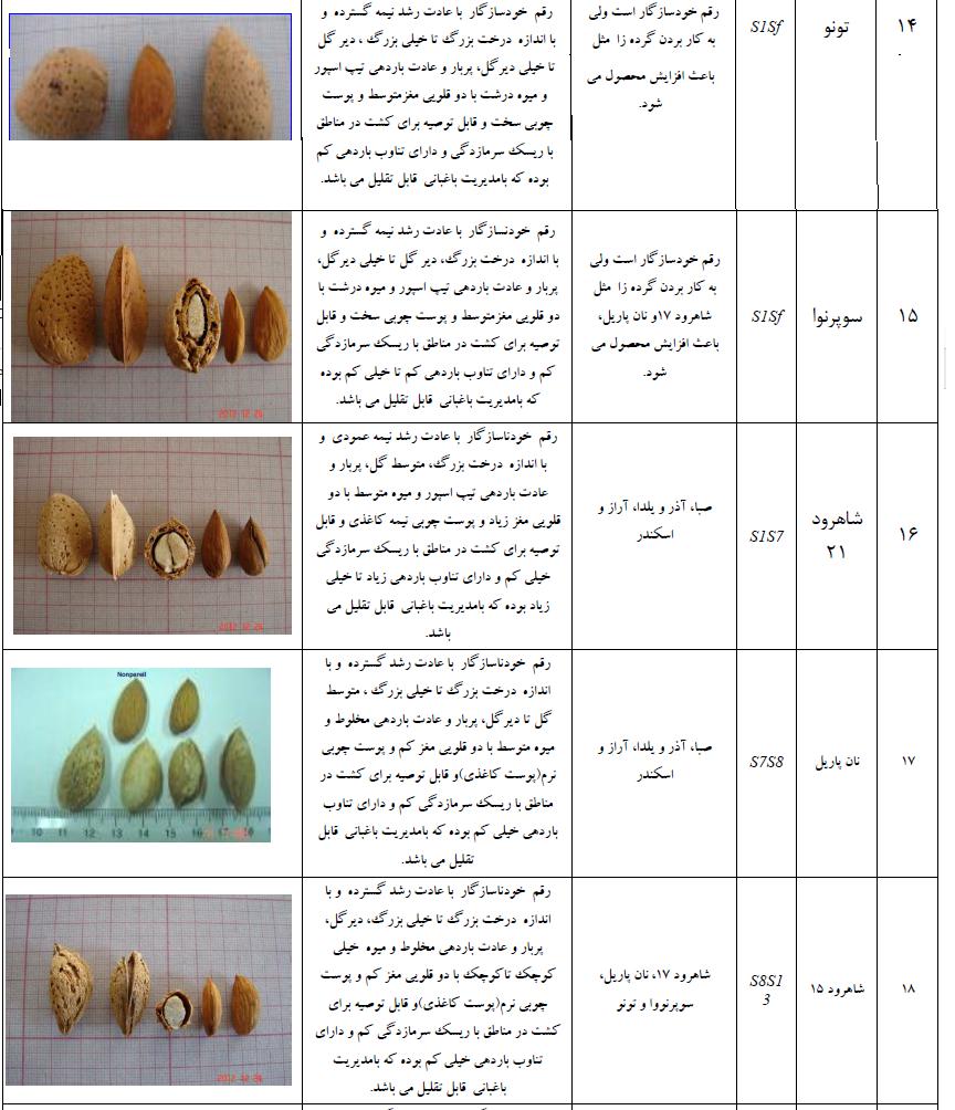 ارقام مختلف بادام برای احداث باغ بادام