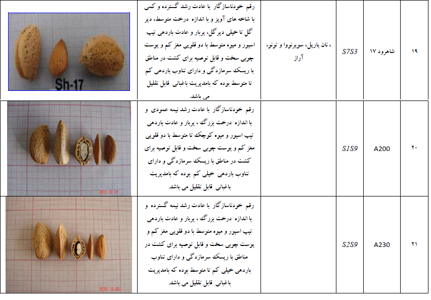 ارقام ختلف بادام برای احداث باغ بادام