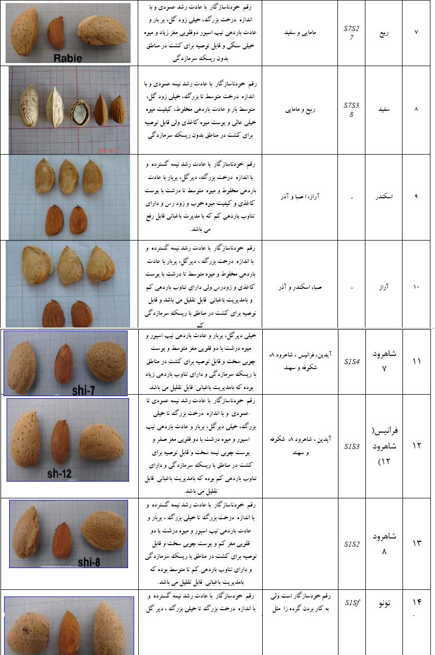 ارقام مختلف بادام برای حداث باغ بادام