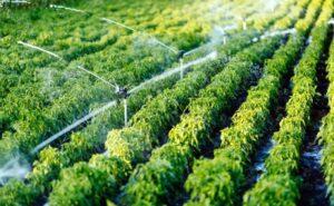انواع سیستم آبیاری مزارع کشاورزی