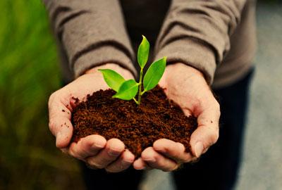 تفاوت کشاورزی ارگانیک و غیر ارگانیک